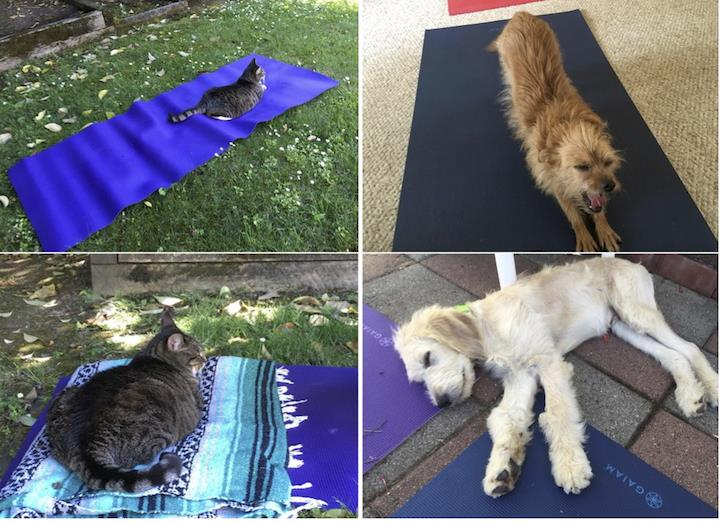 Relaxed, contented pets at private yoga classes.